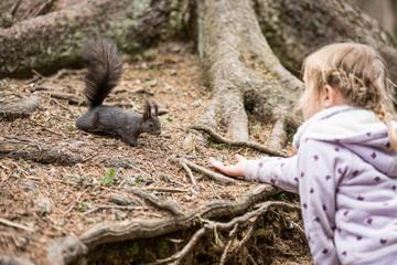 Mädchen füttert Eichhörnchen mit einer Haselnuss, Europäisches Eichhörnchen (Sciurus vulgaris)
