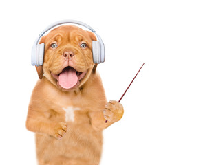 Funny puppy listening wireless music with headphones and pointing away on empty space. Isolated on white background