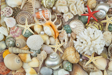 Tropical seashells, pearls, corals and starfishes mixed together. Sea life and ocean bottom concept for wallpapers and post cards.
