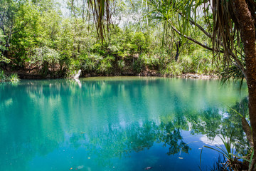 Berry Springs, a fresh water spring in the Northern Territory.