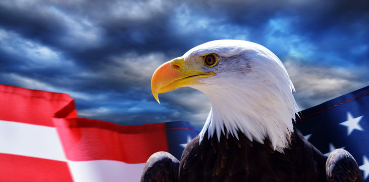 North American Bald Eagle (Haliaeetus leucocephalus) and USA flag with dark storm clouds at the background. United States of America patriotic symbols.