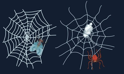 spider web set in flat style. picture work