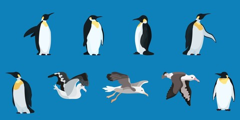 albatrosses and penguins compilation flat style