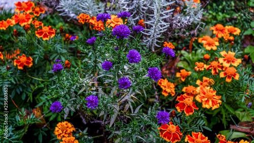 Herbstblumen In Voller Pracht Im Garten Stock Photo And