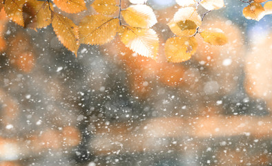 Printed roller blinds Orange Autumn park in the first snow