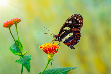 Acrylic Prints Butterfly Beautiful butterfly sitting on flower in a summer garden