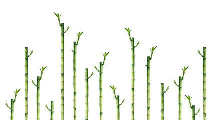 Group of young bamboo branches on white background