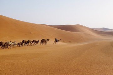 Poster Kameel A camel caravan in the desert of Riyadh, Saudi Arabia.