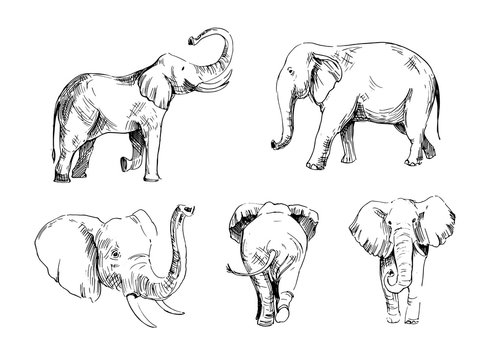 Elephant sketch. Hand drawn illustration converted to vector. Outline isolated on white background