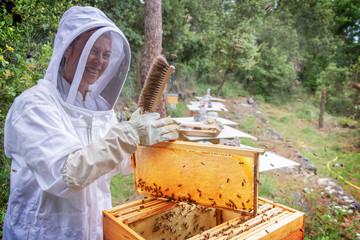 Femme apiculteur sous sa vareuse très souriante et heureuse durant la récolte de miel dans une ruche ouverte avec un cadre rempli de miel operculé dans un rucher biologique en forêt sud de la France