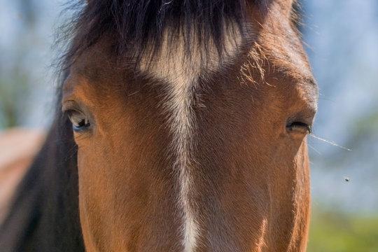 Pferd blinzelt gegen Fliegen