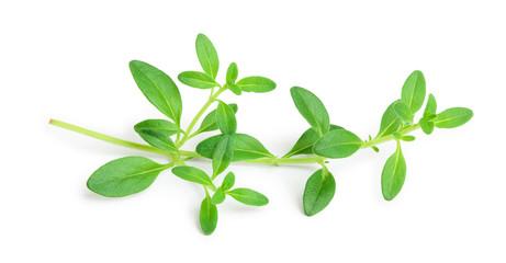 Fototapeta Fresh thyme spice isolated on white background obraz