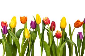 Spoed Fotobehang Tulp Bunte Tulpen Freisteller
