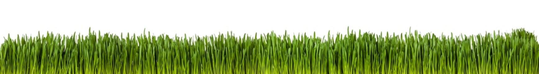 Gras im länglichen Format als Freisteller