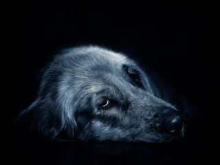 The face image of a dog is showing bored emotions