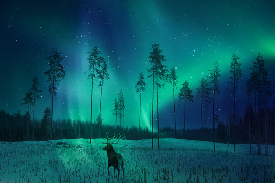 Silhouette of a deer in the winter forest against the backdrop of the northern lights. Winter artistic image.