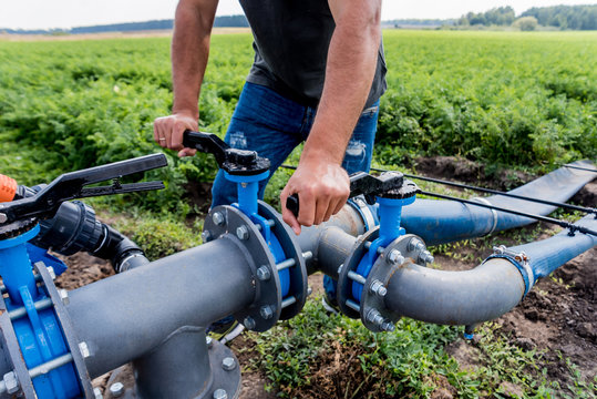 Drip irrigation system. Water saving drip irrigation system being used in a young carrot field. Worker opens the tap