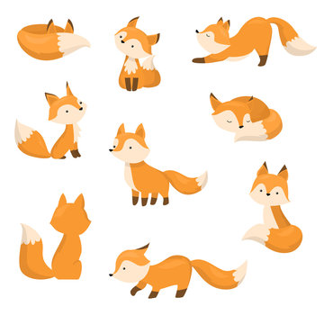 A set of cute cartoon foxes in different actions. Vector illustration in flat cartoon style.