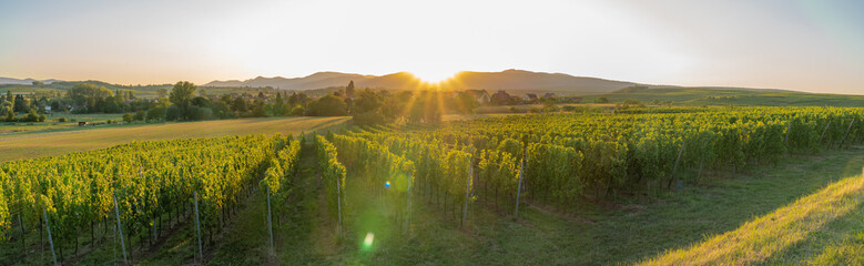 Photo sur Plexiglas Vignoble Dangolsheim, France - 09 17 2019: Panoramic view of the vineyards and the village at sunset.