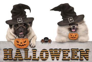 cute halloween puppy dogs - pug and pomeranian spitz - with pumpkin candy basket for trick and treat, on wooden banner with text, isolated