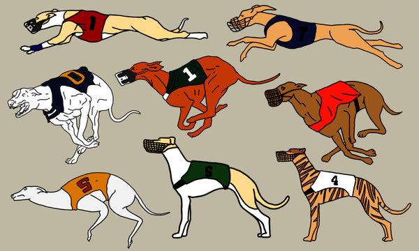 Greyhound dog race, Vector illustration, full color