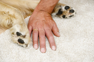 dog paw and human hand  lying on on carpet in the house