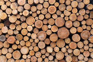 Tuinposter Brandhout textuur Stacked Wood Logs Pattern Background