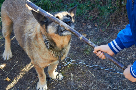 Cruelty to Pets. The dog is beaten with a stick