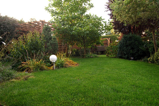 level lawn and trees in the autumn garden