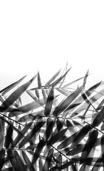 The concept of placing bamboo leaves on a white background with free space.
