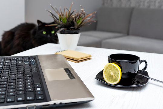 Home office and work in apartment concept. Black cat with green eyes on a computer on a table in home office.