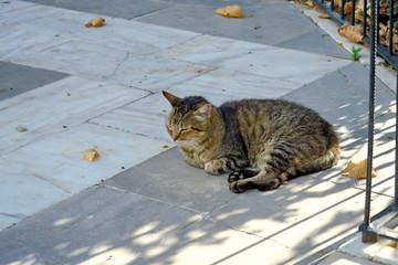Chat de gouttière à l'ombre endormi.