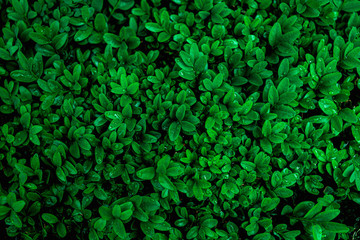 Fotomurales - abstract green leaves pattern texture, nature background, tropical leaves