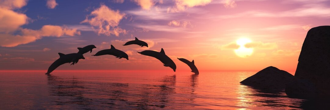 Playing dolphins at sunset. Seascape with dolphins.