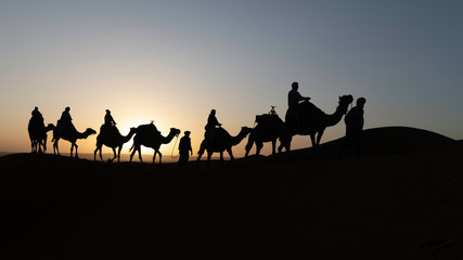 Silhouetted camel caravan at sunrise with sun shining behind a camel