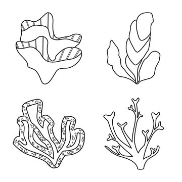 Isolated object of sea and ocean icon. Set of sea and flora stock vector illustration.