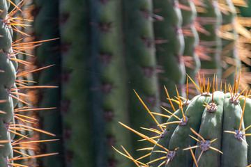 Detailed close-up of cactus showing orange spines and spider thread