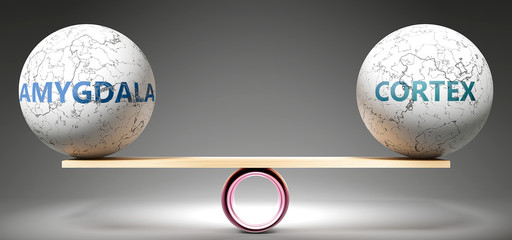 Amygdala and cortex in balance - pictured as balanced balls on scale that symbolize harmony and equity between Amygdala and cortex that is good and beneficial., 3d illustration