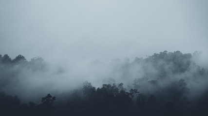In the mist and rain forest, darkness
