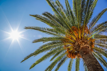 Date palm and sun in sky, view of the palm tree from the bottom up. Glare from the sun, real photo. Wall mural