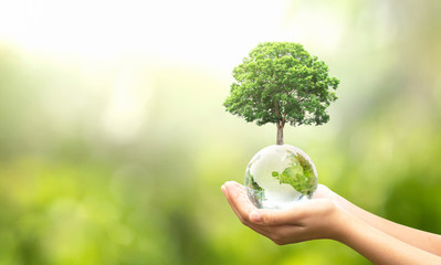 Wall Mural - hand holding glass globe ball with tree growing and green nature blur background. eco concept