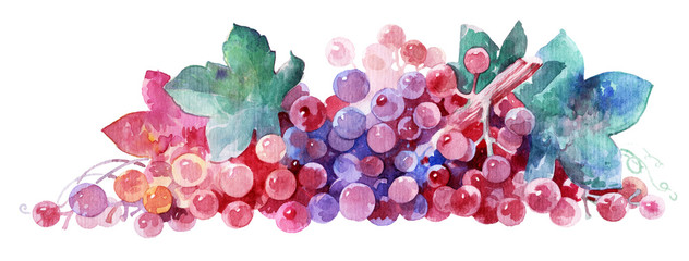 Pink grape twig. Bunch of grapes in watercolor, element for design.