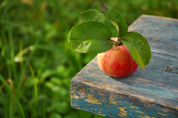 Ripe Apple on wooden table closeup