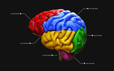 Medically 3d illustration of the human brain in side view isolated on black background with clipping path.