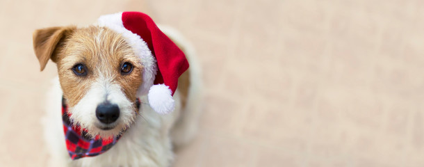 Zelfklevend Fotobehang Hond Happy christmas pet dog puppy with santa hat, web banner with copy space