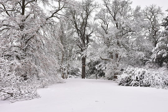 Pragues gardens covered by snow