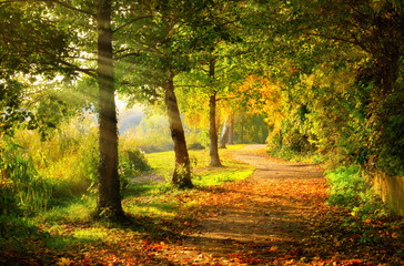 Tranquil footpath in a park in autumn, with beams of light falling through the trees