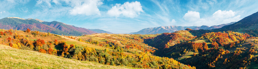 mountain countryside on a sunny autumn evening. gorgeous afternoon weather with fluffy clouds on the sky. panorama with forested hills rolling in to the distant ridge. trees in fall foliage.