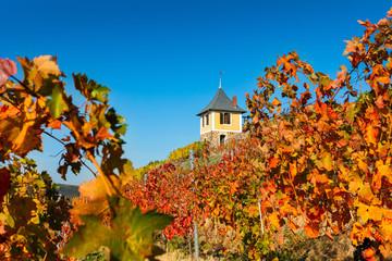 Weinberg im sonnigen Herbst mit bunt gefärbten Blättern und einem Weinbergshaus