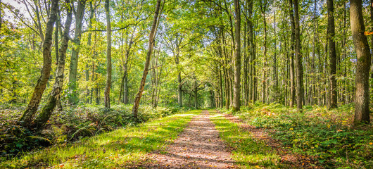 Foto op Aluminium Weg in bos Natural landscape of belgian forest with deciduous trees and a hiking trail on a beautiful day in the beginning of the autumn.